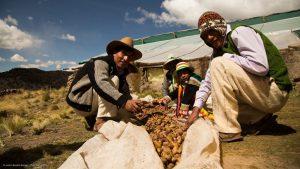 Proteger la agricultura en tiempos de pandemia